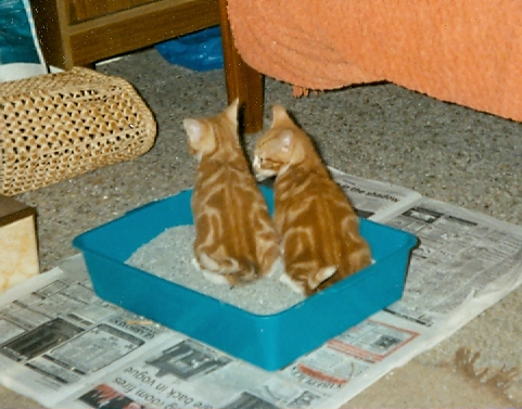 Joey and Billy in the litter tray