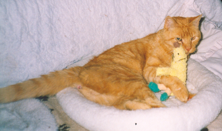 Garfield with BananaMan