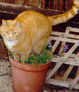 Biggles_in_pot_of_catnip