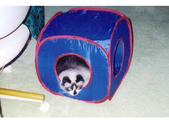 Lucy in kitty cube