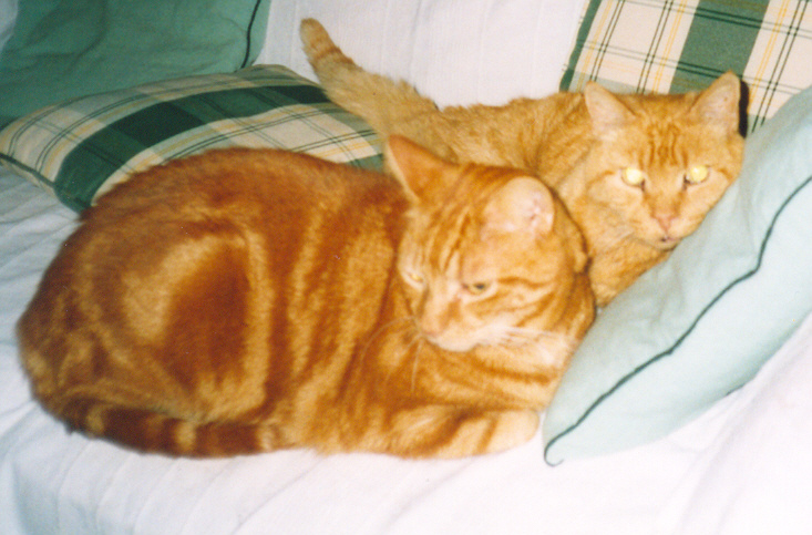 Timmy and Garfield - always together - December 2004