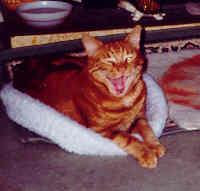 Timmy yawning!