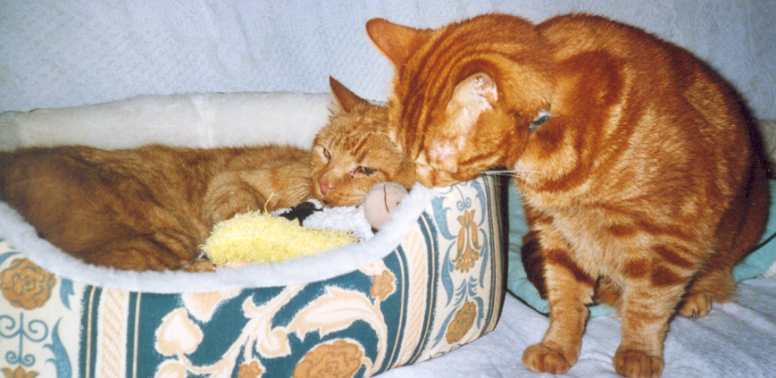 Timmy wishing Garfield a happy 20th birthday. Garfield in his new birthday bed