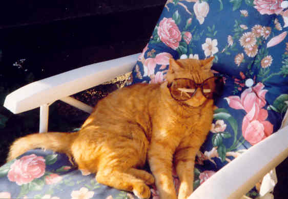 Garfield sunbathing with sunglasses