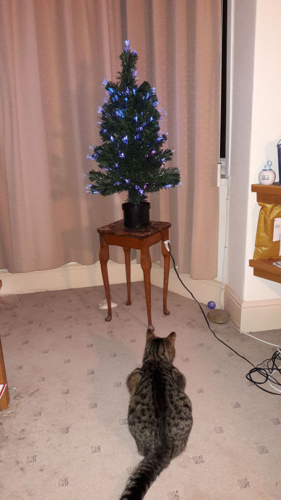 Denver admiring the Christmas tree
