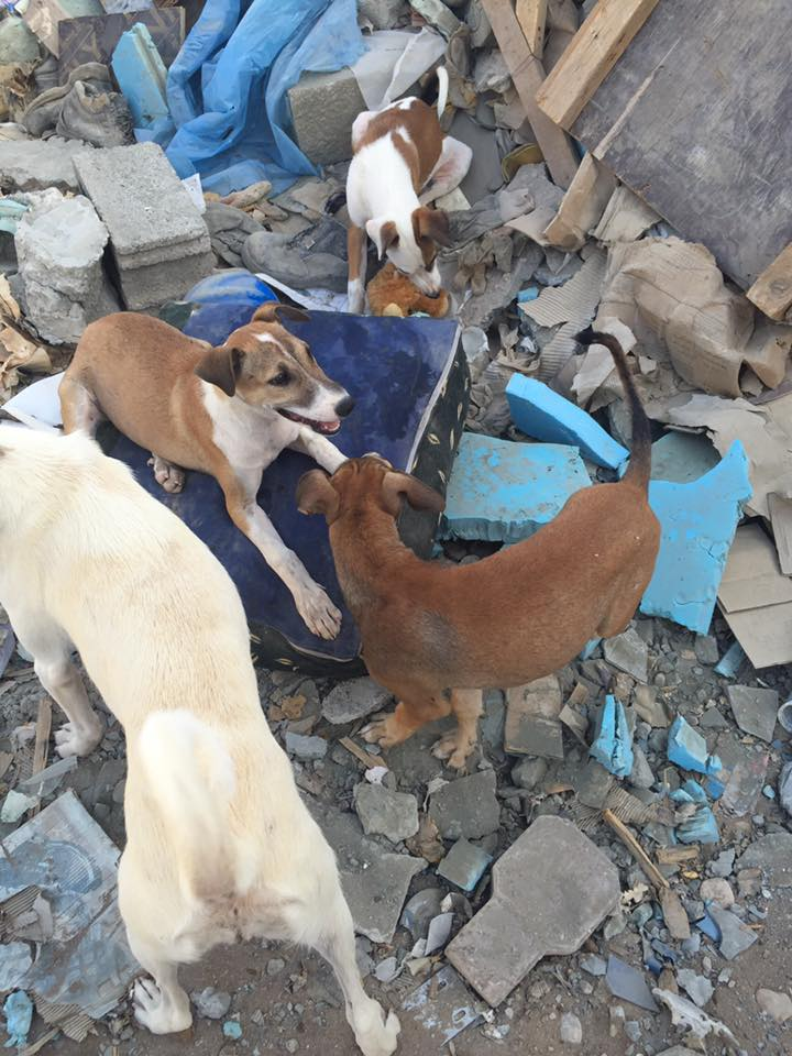 Muscat stray dogs