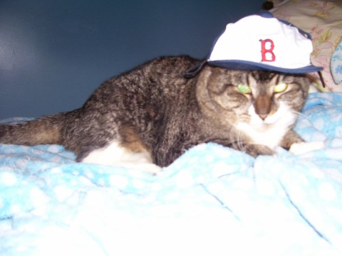 KaChoo and her Red Sox cap