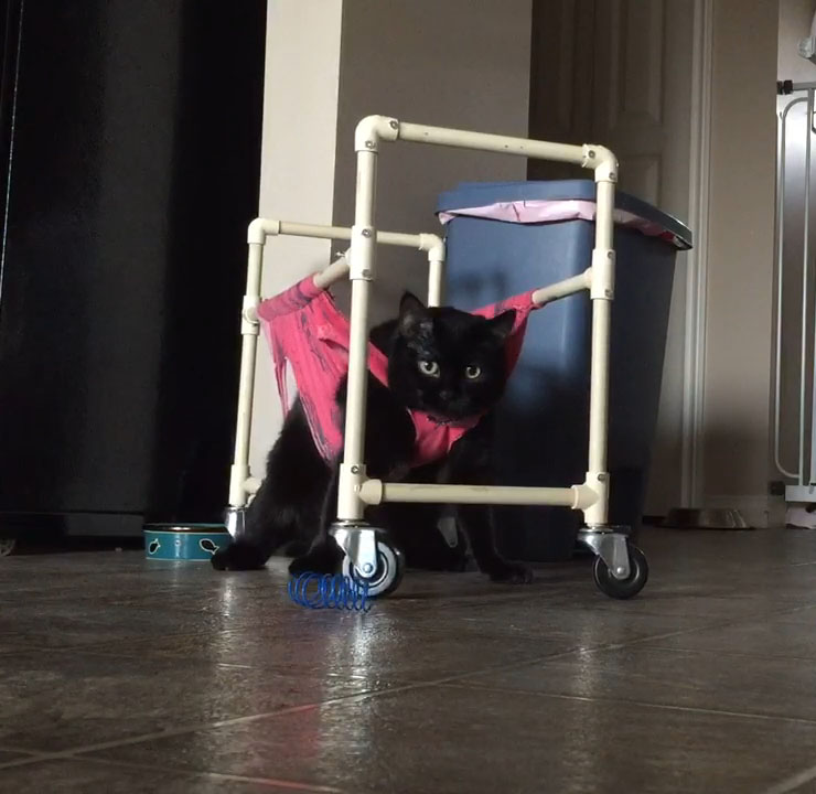 Merida in her walker
