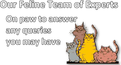 meet our feline team of experts